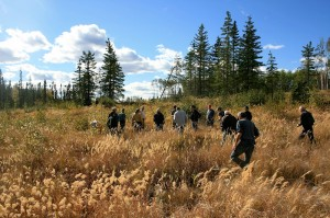 AGM-2012-Grasses-threaten-to-choke-out-young-plantings-and-must-be-monitored-carefully